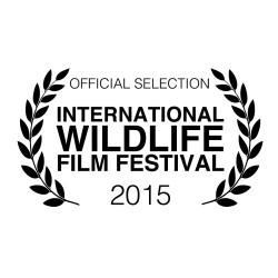 Antarctic Edge International Wildlife Film Festival
