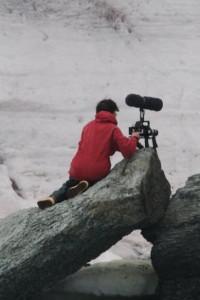 Dena films elephant seals